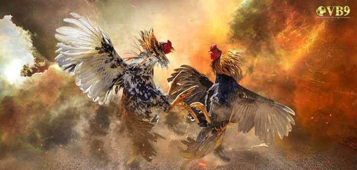 đá gà trực tiếp, vb9 đá gà trực tiếp, vuabai9 đá gà trực tiếp, đá gà online, đá gà, vuabai9