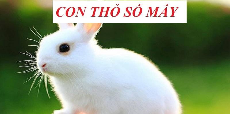 Giải mã giấc mơ: Mơ thấy thỏ phù hợp với số lô đề nào