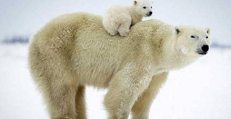 Giải mã giấc mơ: Mơ thấy gấu thì đánh con gì dễ trúng