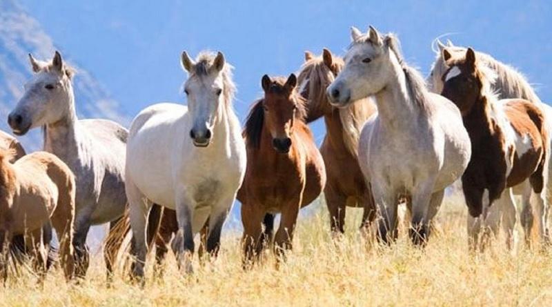 Giải mã giấc mơ thấy ngựa - Số lô đề với từng giấc mơ