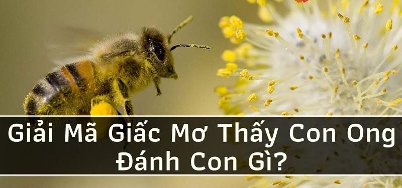 Giải mã giấc mơ: Thấy ong và tổ ong thì nên đánh số lô đề nào?