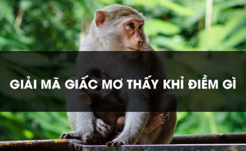 Nằm mơ về khỉ thì nên đánh số lô đề nào? Con số tương ứng với từng giấc mơ