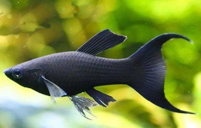 Giải mã giấc mơ: Mơ thấy cá đen thì nên chơi số lô đề nào?