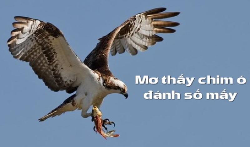 Chiêm bao thấy chim ó thì nên đánh số lô đề nào ?
