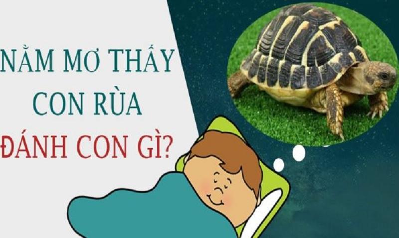 Giải mã giấc mơ: Nằm mơ thấy Rùa nên đánh số mấy?