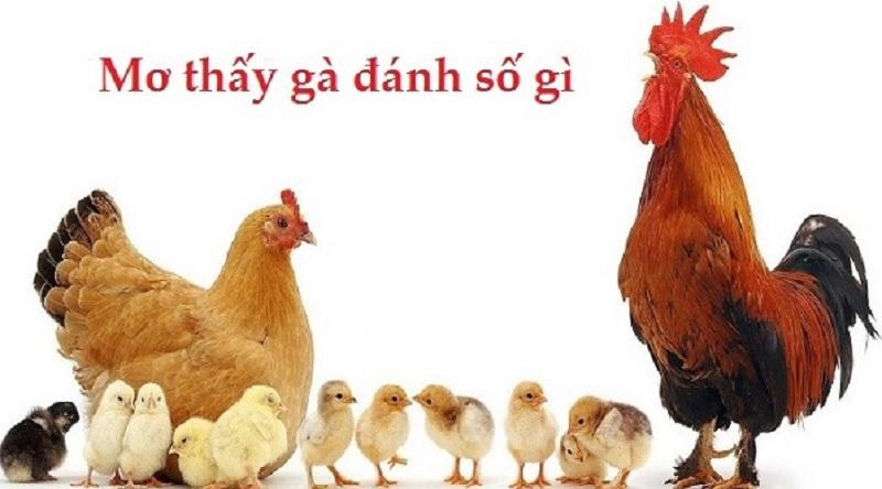 Giải mã giấc mơ: Nằm mơ về con gà thì nên tìm kiếm số lô đề nào